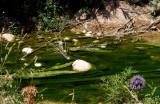 wadi amud stream green.JPG