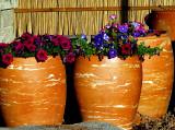 flower pots manta ray.jpg