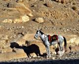 horse side.JPG