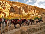 horses standing.JPG