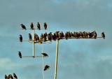 birds antenna888.jpg