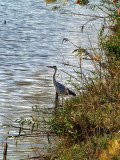 crane by river2.JPG