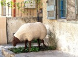 Jerusalem sheepstatue1.JPG