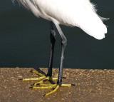 egret feet.JPG