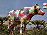 cow fruit_ed.jpg