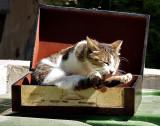 cat_ed.jpg