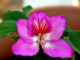 P4070593_flower.jpg