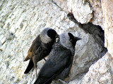 tower wall birds3.JPG