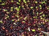 olive_oil_making