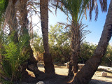nahal palm cluster.JPG