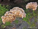 Fungus Ya.jpg