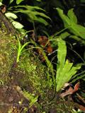 Epiphytes on a tree trunk A1a - RN.jpg