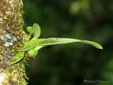 Orchid B1a - RN.jpg