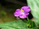 Flower E3a - Sav.jpg