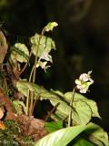 Flowers G2a - Sav.jpg