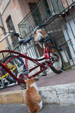 Cats in Istanbul