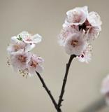 Victoroius Spring