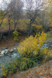 Autumn, color gallery season