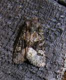 moth-04-08-2008-9.jpg