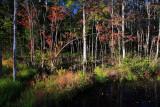 Autumn-in-the-Swamp-1