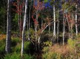 Autumn-in-the-Swamp-2.