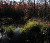 Swamp-Early Spring