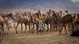 Keeping the camels in line