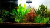 My Fish