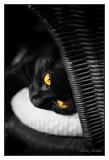 Ojos de Luna Creciente