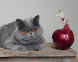 Cat + Red Onion