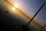through the net