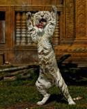 New Wild Animal Shoot