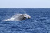 Maui 2010_02282010_023.jpg