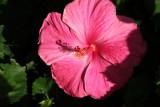 Maui 2010_03022010_098.jpg
