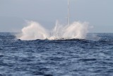 Maui 2010_03052010_323.jpg