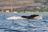 Maui 2010_03052010_383.jpg