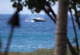 Whale breach while we were having lunch at Duke's