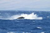 Maui 2010_03082010_610.jpg