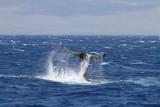 Maui 2010_03082010_619.jpg