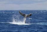 Maui 2010_03082010_620.jpg