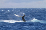 Maui 2010_03082010_626.jpg
