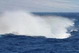 Maui 2010_03082010_653.jpg
