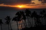 Maui 2010_03082010_688.jpg
