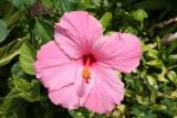 ***Ang's Pics - Maui 2010***  Click to see Ang's Pics from Maui