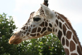 Backstage Safari Tour (Animal Kingdom)