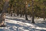 Bosque nevado / Snowy forest