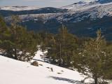 Nieve y árboles / Snow and trees