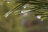 Gotas de hielo / Ice's drops
