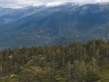 Arboles aquí y arboles allá / Trees here and trees there