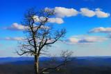 Lone Tree at Deep Gap
